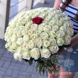 100-belyh-i-1-krasnaya-roza
